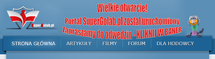 SuperGolab.pl - hodowcy gołębi pocztowych